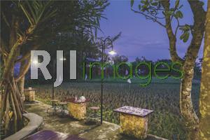 Makan Mewah Di Pinggir Sawah, Olah Rasa Ayongé Cafe And Resto